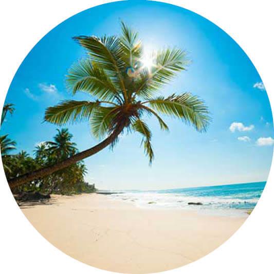 Karibik Palme am Strand