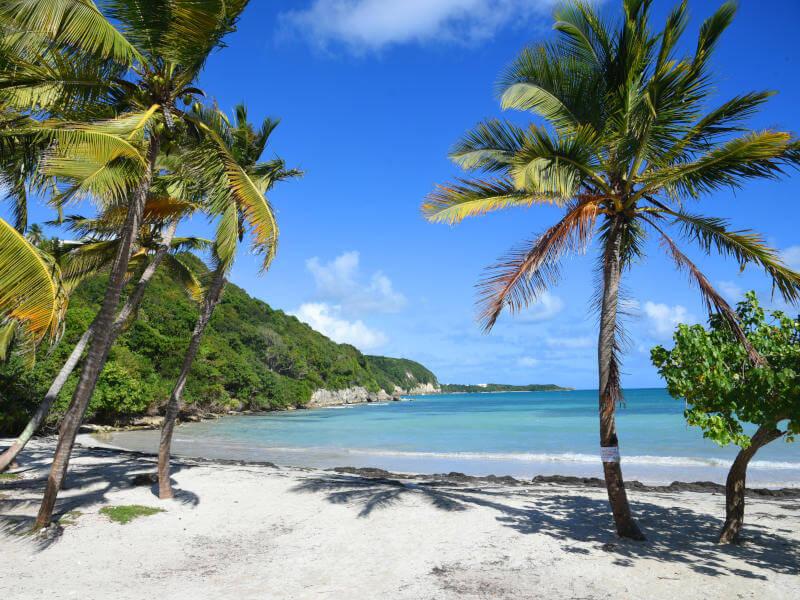 Karibik (östliche) 8 T...